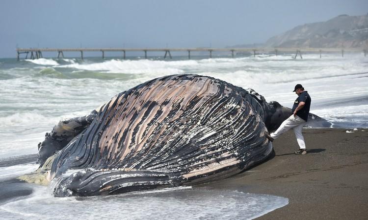 balina-karaya-vurmus