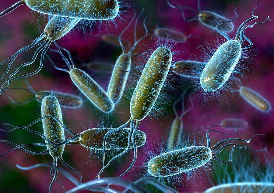 Bakteri çeşitleri hangileridir
