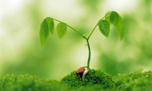 kisa-ve-uzun-gun-bitkileri