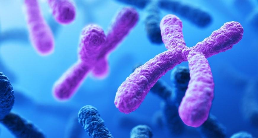 kromozomlar ile ilgili görsel sonucu